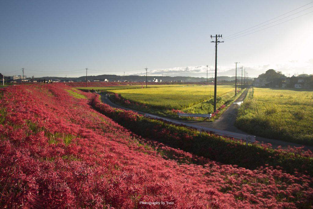 愛知県半田市 矢勝川 2018/9/23