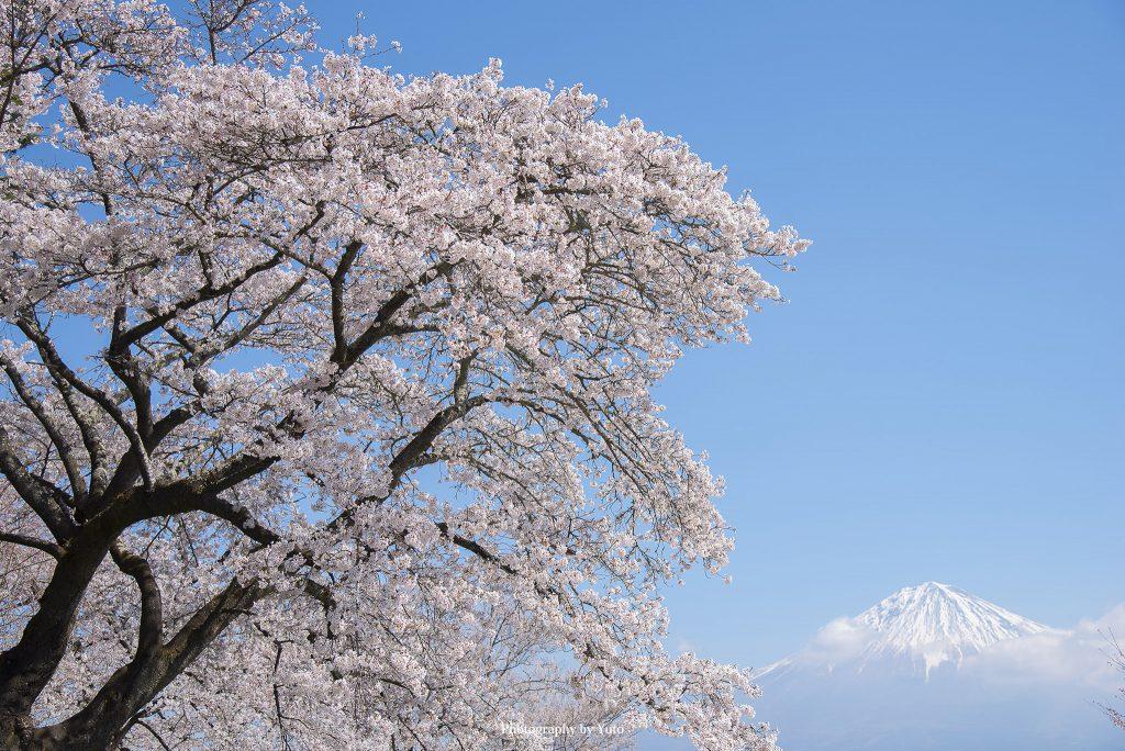興徳寺(静岡県富士宮市)
