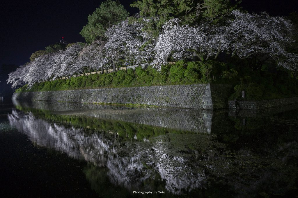 静岡県静岡市葵区 駿府城公園 2019/4/5