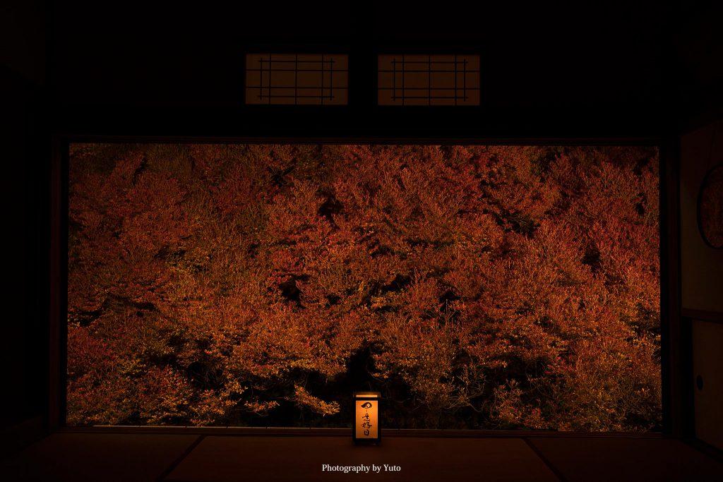 兵庫県豊岡市 安国寺 2019/11/16 撮って出し