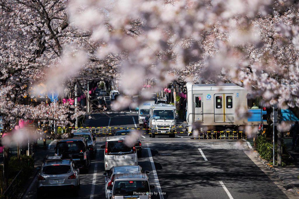 東京都中野区 新井薬師前公園2号踏切 2019/4/3