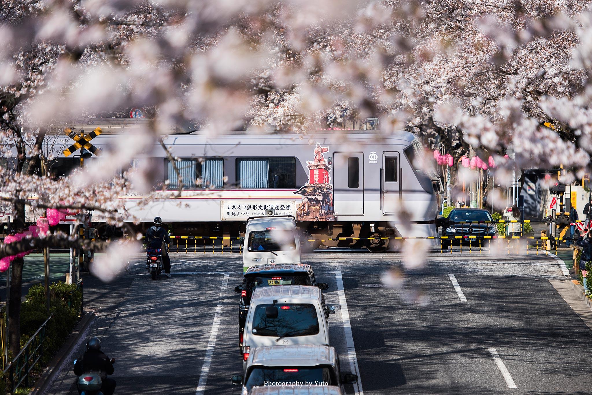 東京の桜 中野通りの桜並木 新井薬師公園前2号踏切 通過する西武線と桜のコラボが綺麗