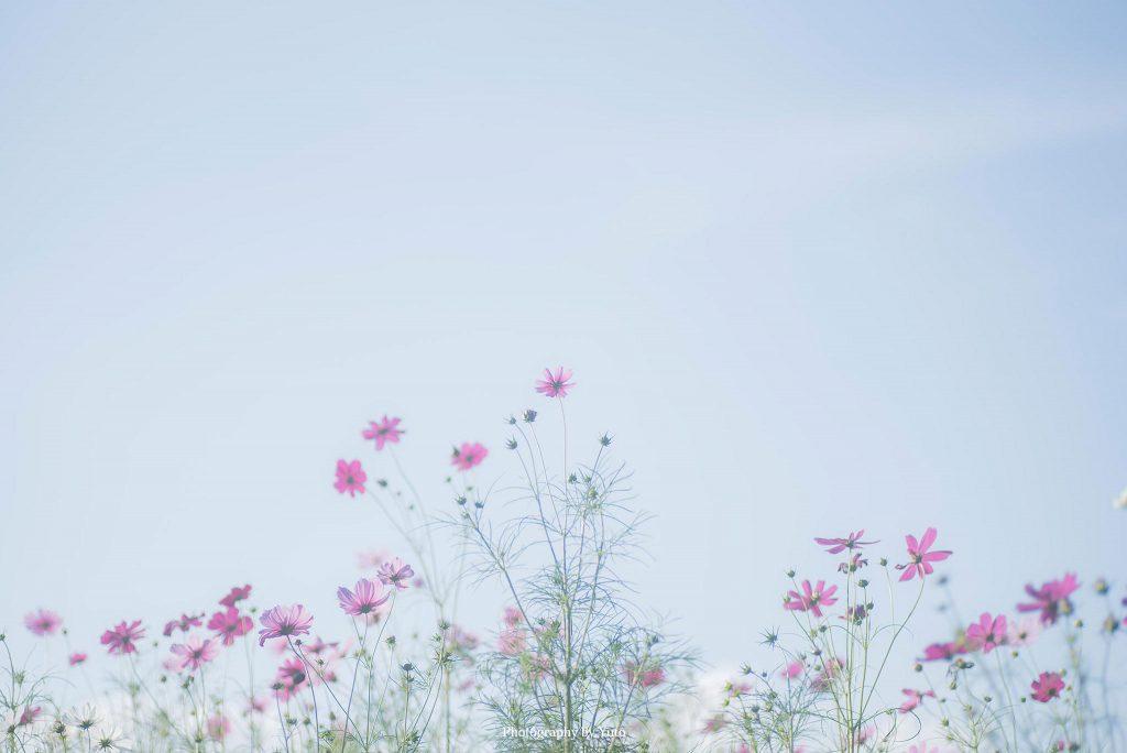 大阪府吹田市 大阪万博記念公園 2017/10/9