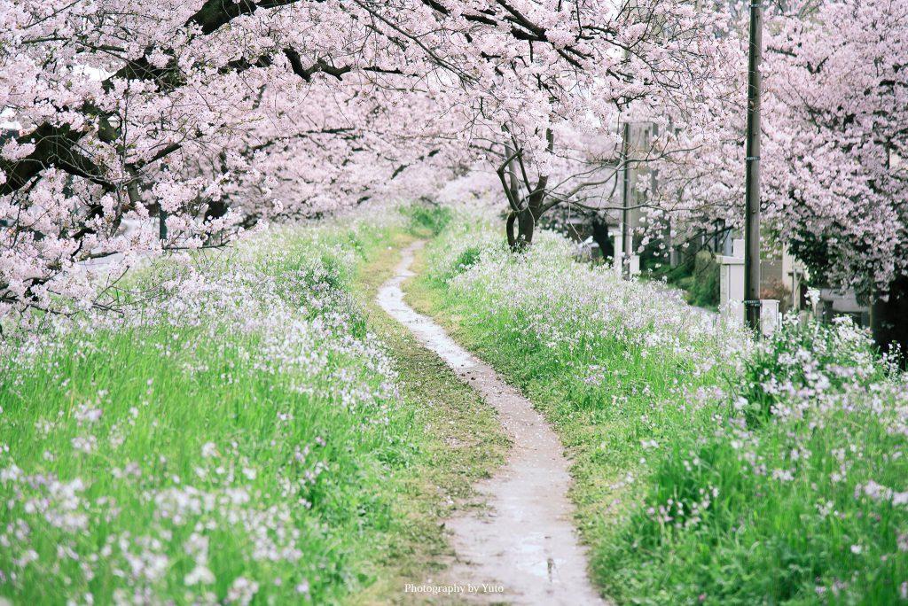 東京都世田谷区 二子玉川 2016/4/5