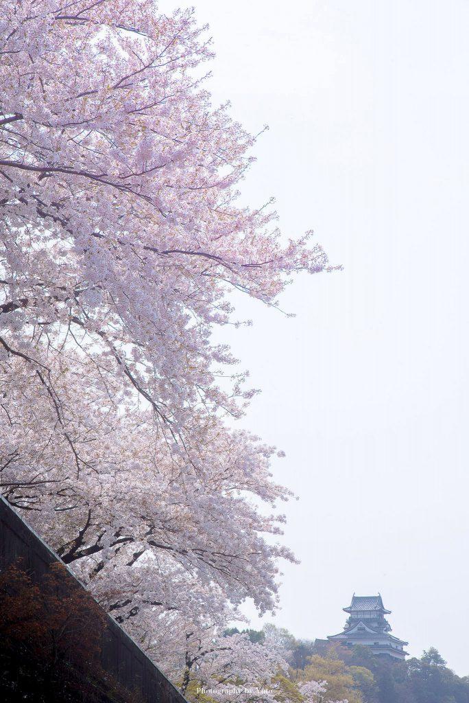 愛知県犬山市 犬山城 2018/4/1