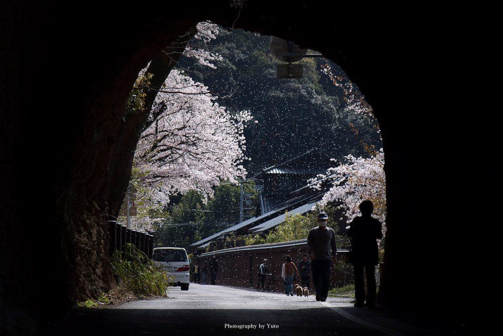 愛知県犬山市 城下町 2018/4/1