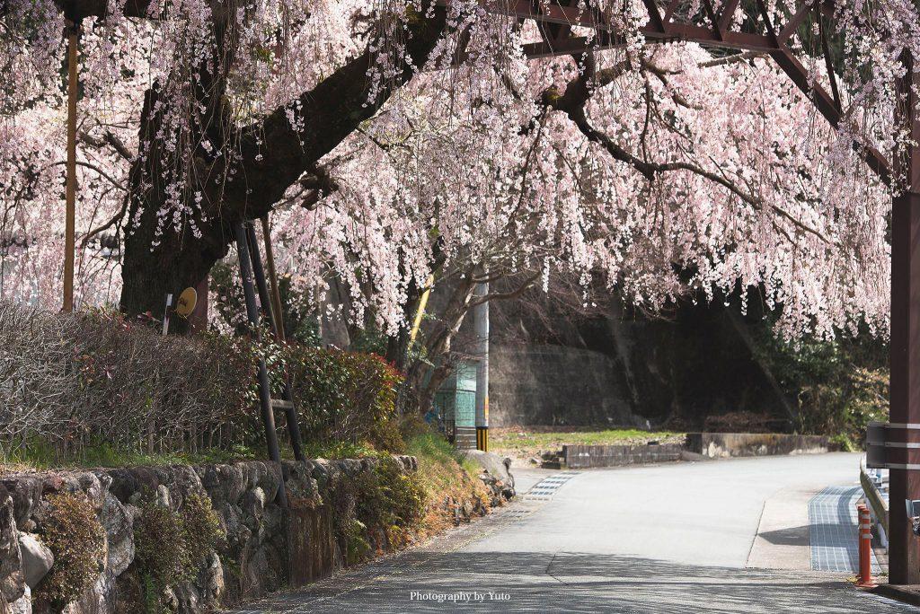 三重県大紀町 伊勢柏崎 2019/3/28