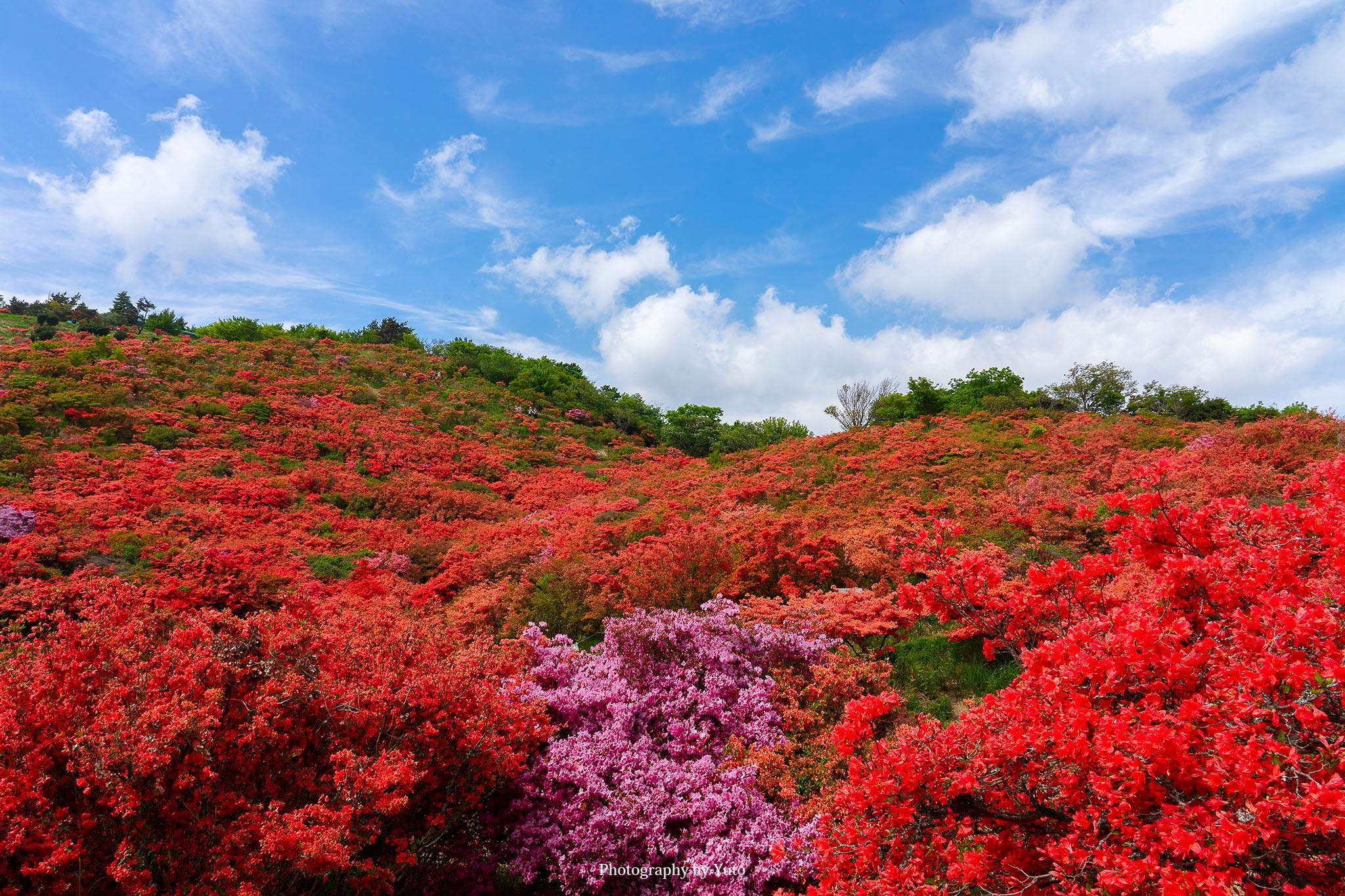 花の撮り方:ツツジ 撮影のレシピ