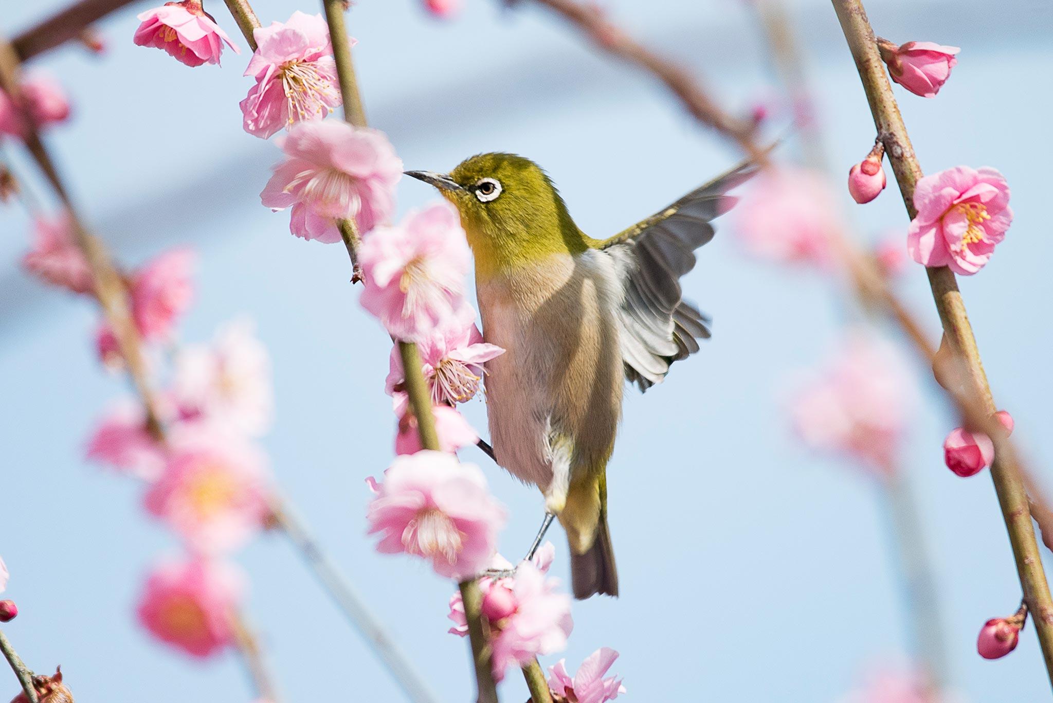 花の撮り方:梅 とにかく撮り方を知りたい時に見る記事
