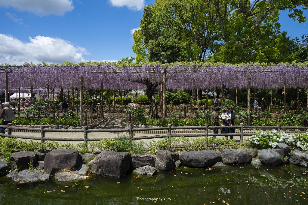 愛知県江南市 曼荼羅寺公園 2019/4/26