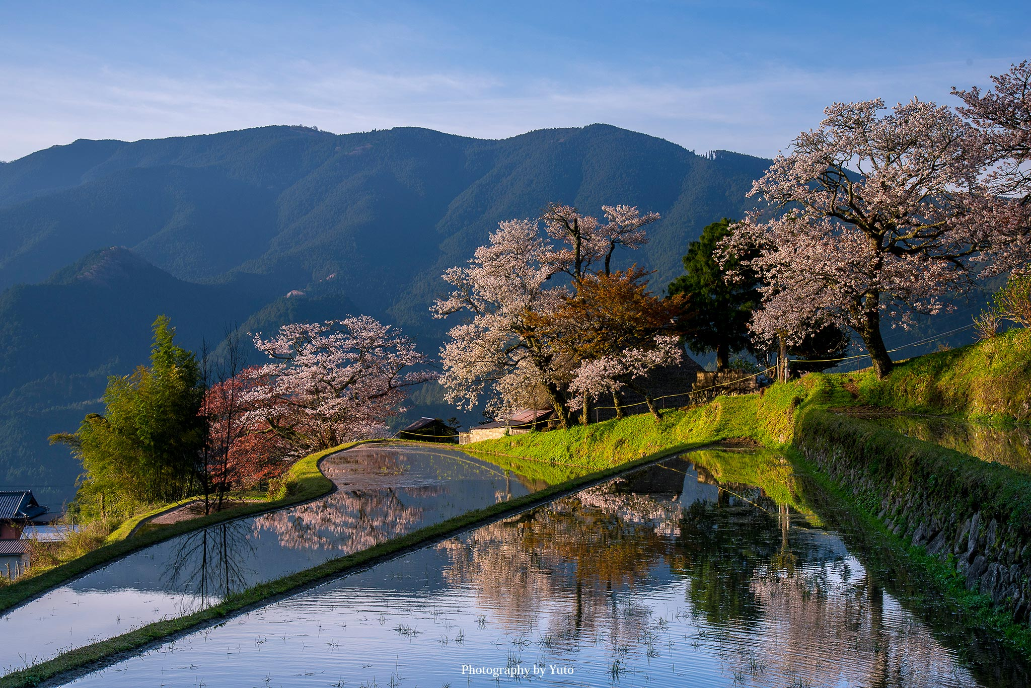 三重県の桜 撮影スポットまとめ