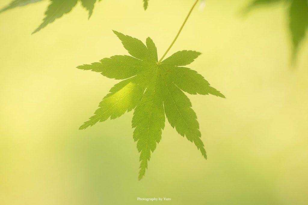 三重県度会町 宮リバー度会パーク 2020/6/16