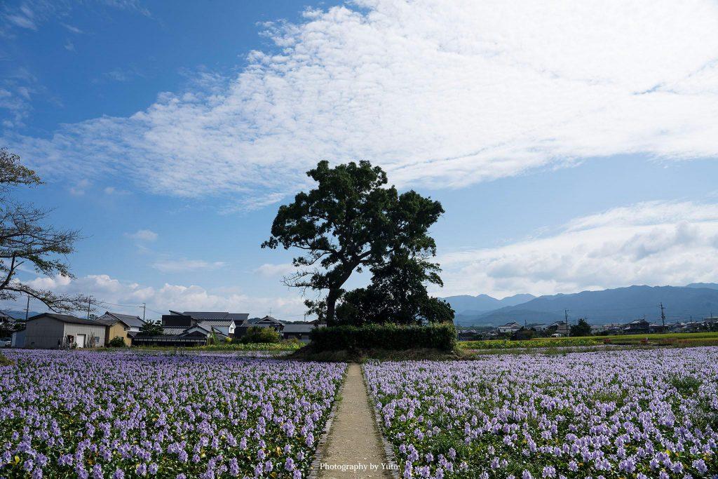 奈良県橿原市 本薬師寺 2019/9/30