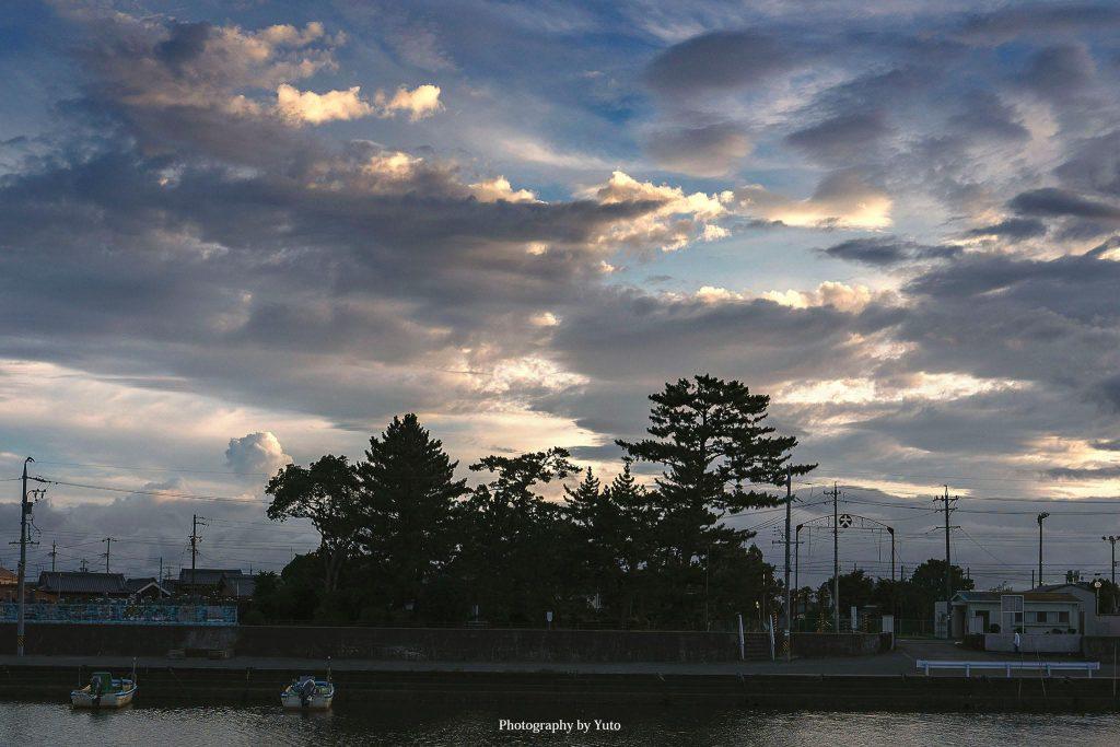 三重県明和町 業平松 2019/8/6