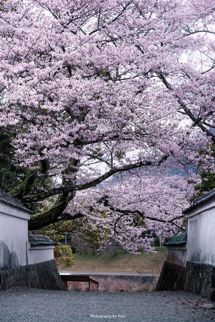 三重県伊勢市 おかげ横丁 2016/4/3