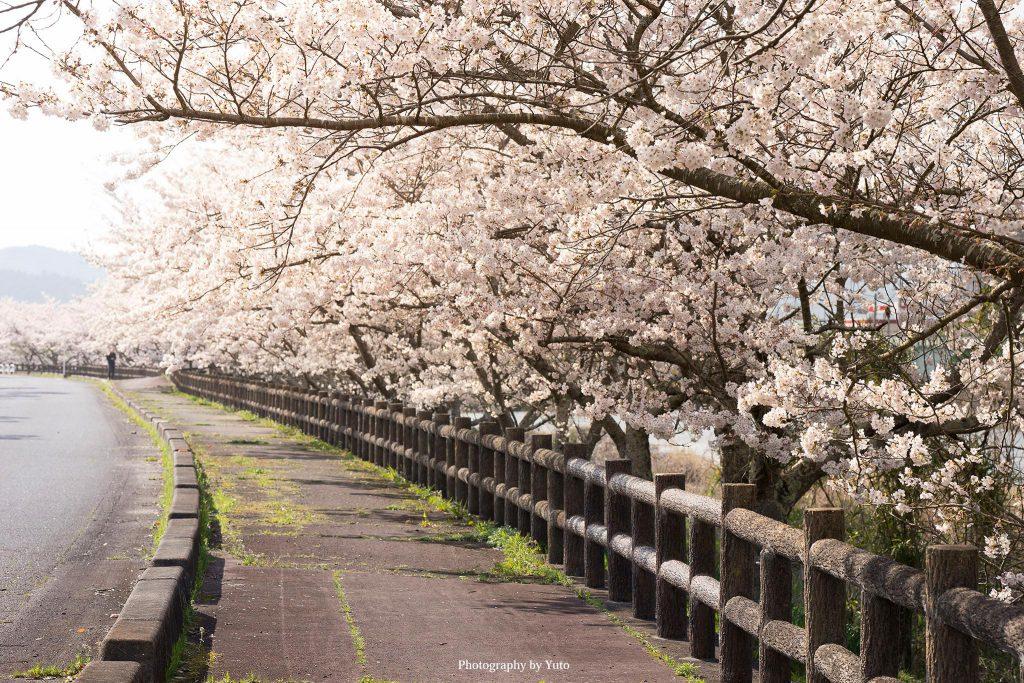 三重県伊賀市 大山田B&G海洋センター 2020/4/4
