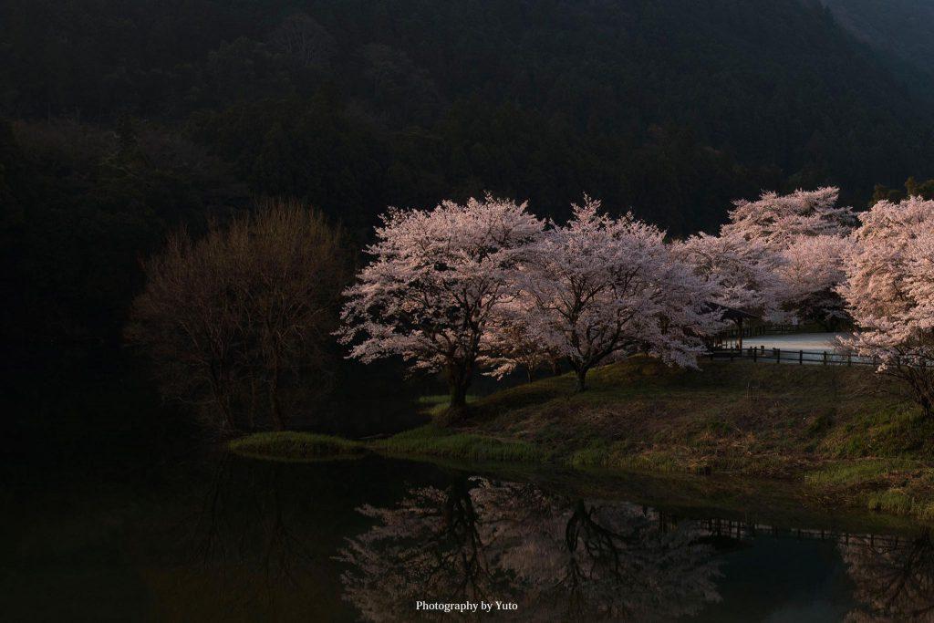 三重県大台町 さくらの里公園 2019/4/7