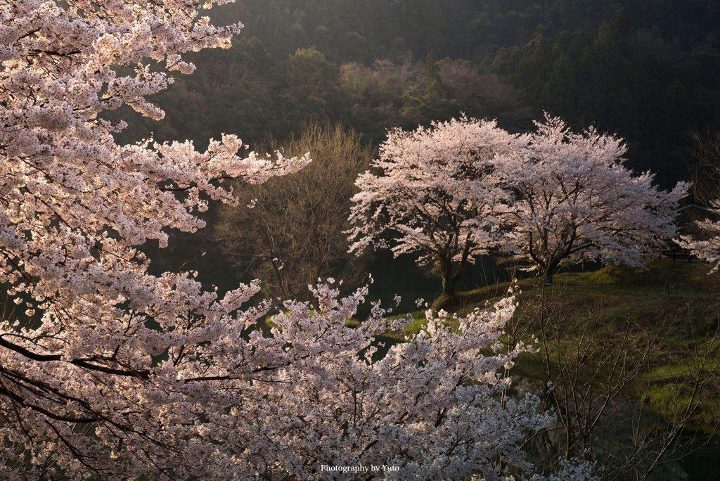 三重県大台町さくらの里公園 2019/4/7