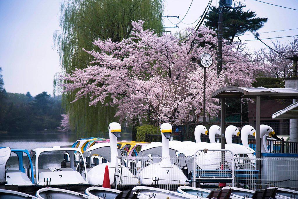 東京都練馬区 石神井公園 2016/4/7