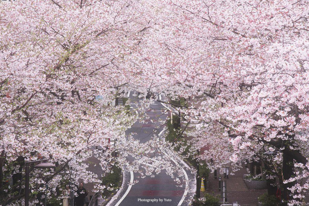 東京都渋谷区 桜坂 2016/4/5