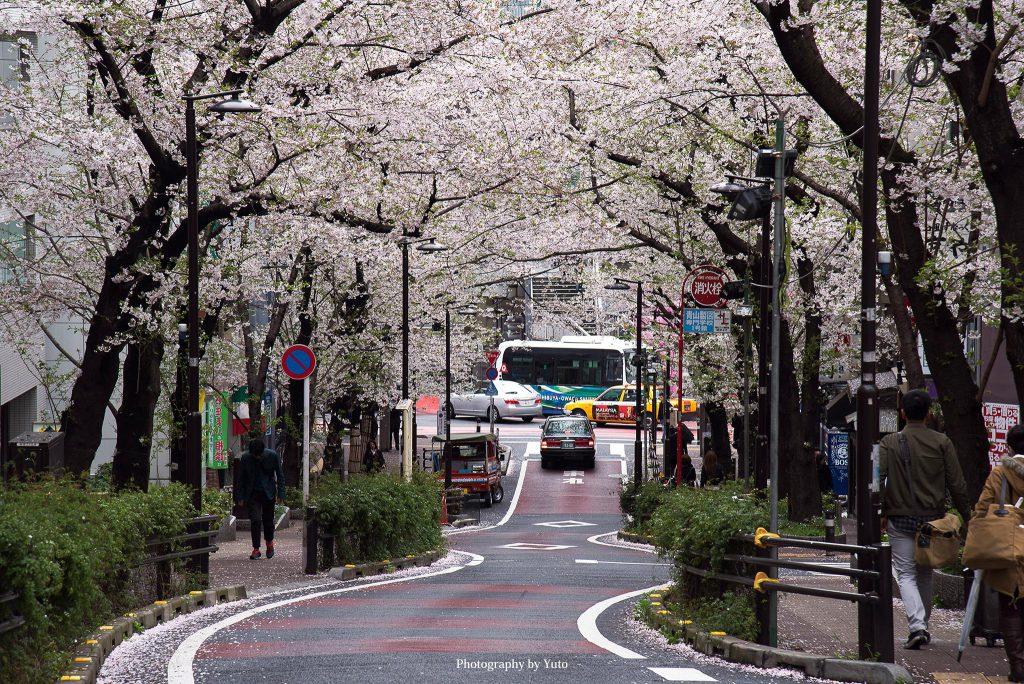 東京都渋谷区 渋谷 桜坂 2016/4/5