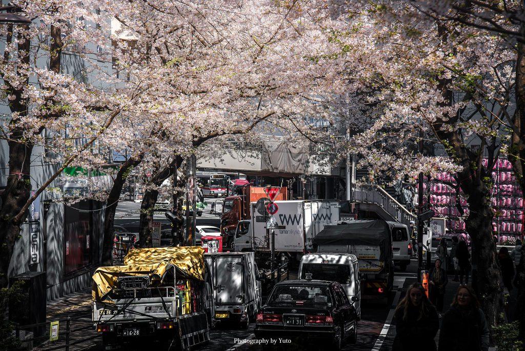 東京都渋谷区 渋谷 桜坂 2019/4/3