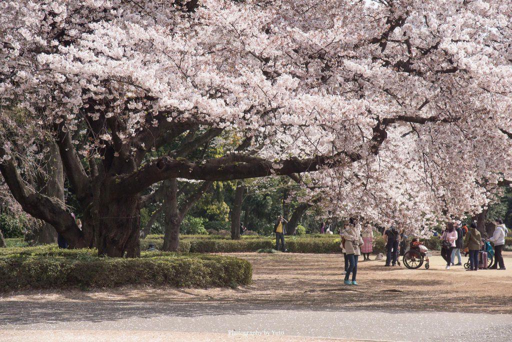 東京都新宿区 新宿御苑 2019/4/5