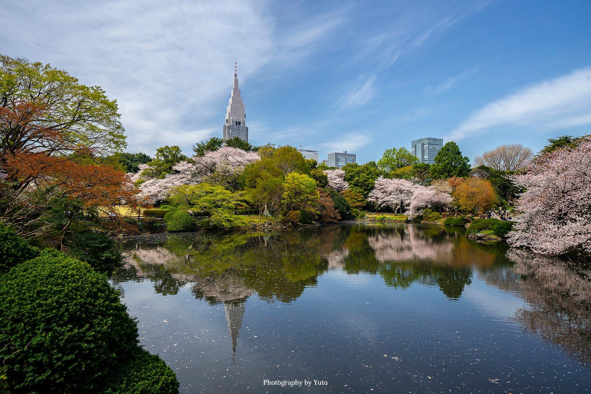 東京の桜 新宿御苑 都内で桜を楽しむなら超オススメな理由を写真付きで紹介