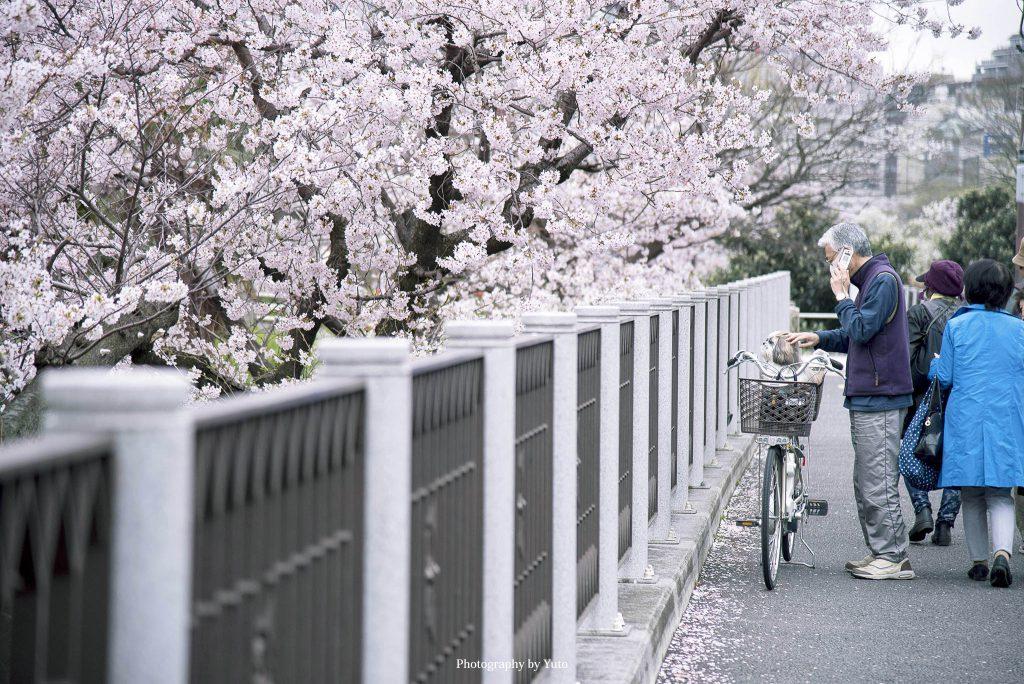 東京都新宿区 外濠公園 2016/4/5