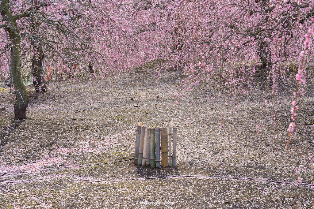 三重県鈴鹿市 鈴鹿の森庭園 2019/3/14
