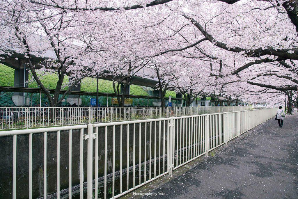 東京都杉並区 高井戸 2016/4/5