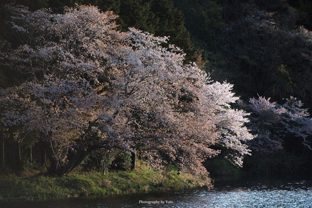 三重県多気町 栃ヶ池 2017/4/12