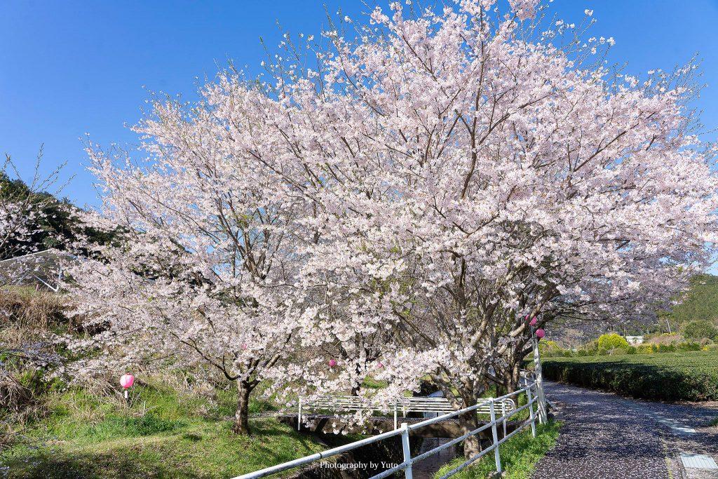三重県大台町 栃原 2019/4/8