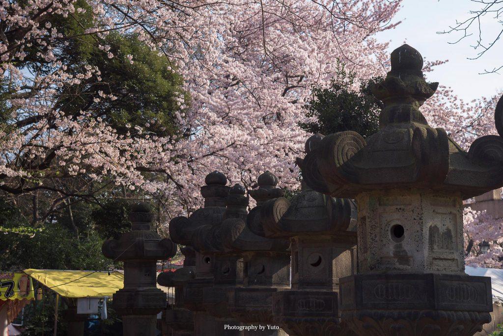 東京都台東区 上野公園 2015/3/31