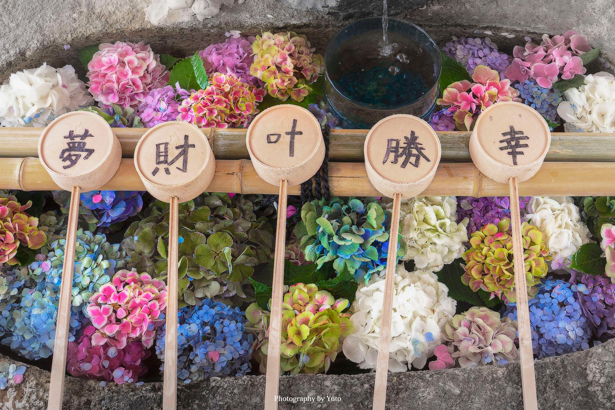 別小江神社(ワケオエジンジャ)・常念寺 愛知県のアジサイ花手水を巡ってきた